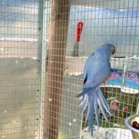 Allevatori di pappagalli, un mix di professionisti armati da tanta passione e amore